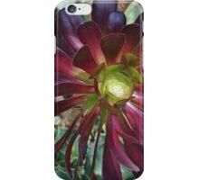 Black Aeonium iPhone Case/Skin