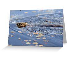 Algonquin Park Beaver Greeting Card