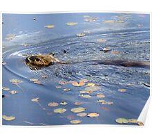 Algonquin Park Beaver Poster