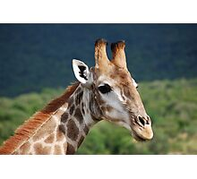 Giraffe Profile Photographic Print