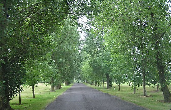 Tree-lined Drive by JenniferJW