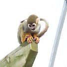 cheeky monkey by carol oakes