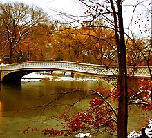 Central Park Beauty by GalloGirlPhotos