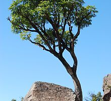 Tree and boulder by justbmac