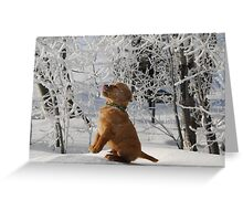 Tasting Frost Greeting Card