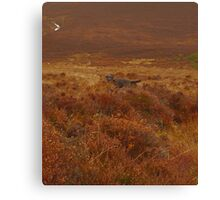 Hiding in the Heather Canvas Print