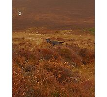 Hiding in the Heather Photographic Print