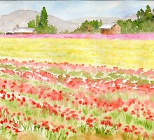 WA Tulip Fields by Diane Hall