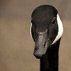 Canada Goose 2 by Franco De Luca Calce
