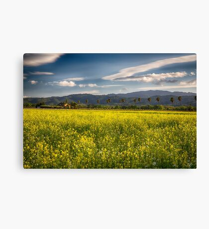 Blooming Yellow Mustard in Napa Valley Canvas Print
