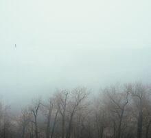 Foggy Day I by Mohammed Al-Ibrahim
