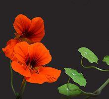 Paint it Orange by cdwork