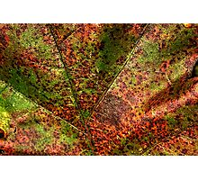 Autumn Leaf Detail Photographic Print