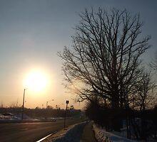 Winter Sun by notculpable