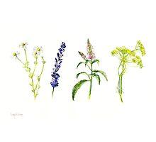 Tea Flowers Photographic Print