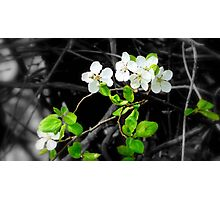 The First Signs of Spring Photographic Print
