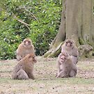 Monkey Meeting by CreativeEm