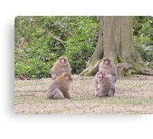 Monkey Meeting Canvas Print