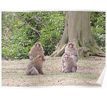 Monkey Meeting Poster