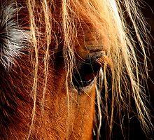 Sunset Horse by laurenpretorius