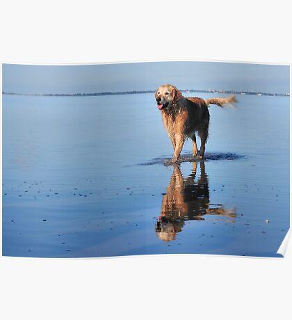 Captains Dog Poster