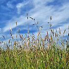 A summer meadow by Sue Purveur
