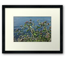 bush thistles on a blue background close to Framed Print