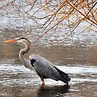 Great Blue Heron by Poete100