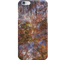 Autumn Tree Canopy iPhone Case/Skin