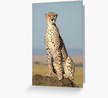 Cheetah- Masai Mara Greeting Card