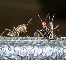 Critters by Kristy  Dorris