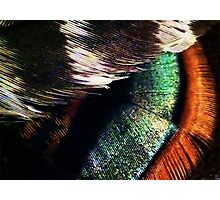 Turkey Feathers Photographic Print