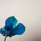 Blue Leaves by Donna Adamski