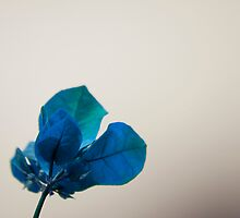 Blue Leaves by Donna Adamski