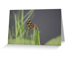 Striped Dragon Fly Greeting Card