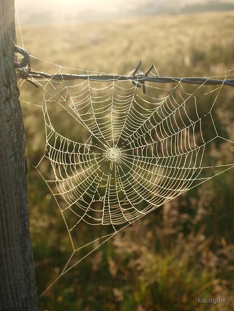 Sun-kissed Web by kalaryder