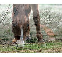 Down on the Farm Photographic Print