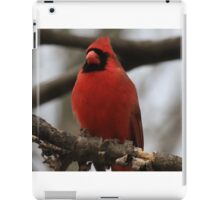Male Cardinal-Looking Handsome iPad Case/Skin