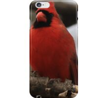 Male Cardinal-Looking Handsome iPhone Case/Skin
