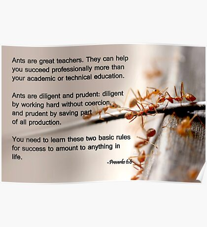 Ants are great teachers Poster