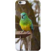 Who's a Handsome Boy Then!  Red Rumped Parrot, 'Arilka' Mt. Pleasant. iPhone Case/Skin