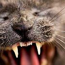 Yawn by Josie Eldred