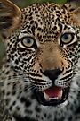 Handsome hunter by Explorations Africa Dan MacKenzie