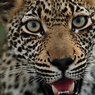 Handsome hunter by Explorations Africa Dan MacKenzie