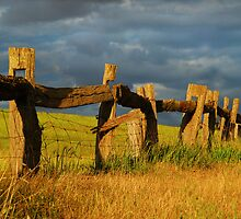 Country Fence by Moorey