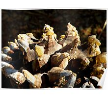 Sappy Pinecone Poster