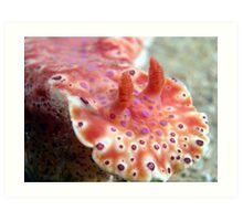 Short tailed nudibranch Art Print