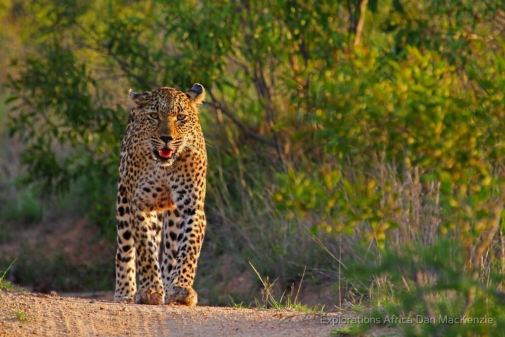 Afternoon stroll by Explorations Africa Dan MacKenzie
