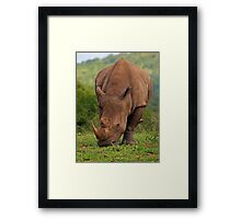 Brute Force and ignorance Framed Print