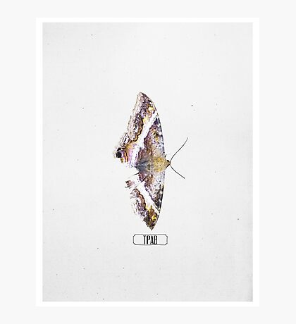 "Kendrick Lamar Graphic ""TO PIMP A BUTTERFLY"" Photographic Print"